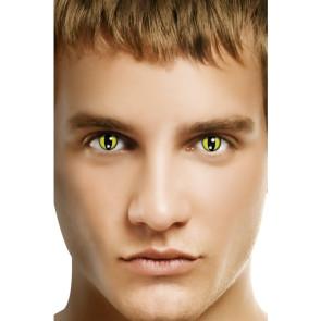 Kontaktlinsen Katzen
