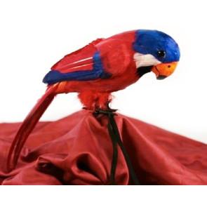 Papagei für die Schulter für den echten Piraten Kapitän